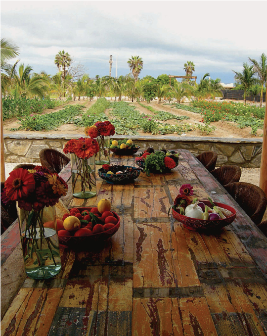Rancho Pescadero table, Rancho Pescadero, Baja, Mexico by Ashley Self