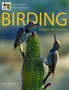 Birding in Baja book by Kaia Thomson, Baja, Mexico