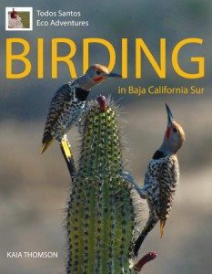 Birding in Baja California Sur cover, Baja, Mexico